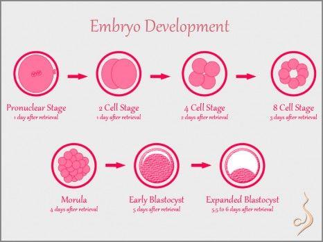 infertilite-basari